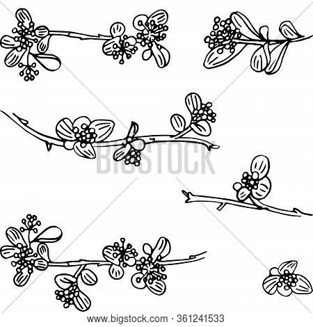 Set Of Twigs Isolated. Delicate Twigs With Small Flowers And Berries. Background For Eco Forest Autu