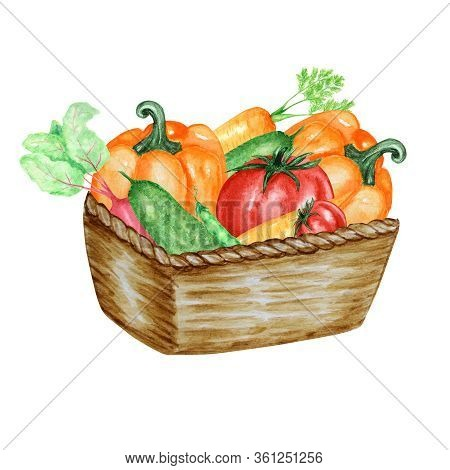 Watercolor Painted Collection Of Vegetables In Wicker Basket. Hand Drawn Fresh Food Design Elements