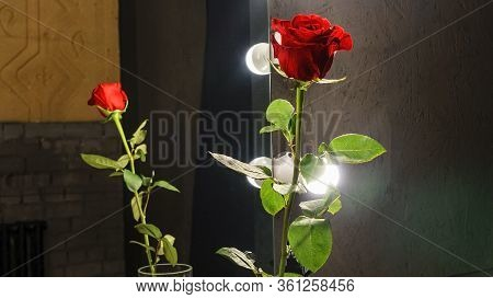 Close-up Reflection Of Red Rose In Makeup Mirror On Black Background. Vain Concept. Light Bulbs Arou