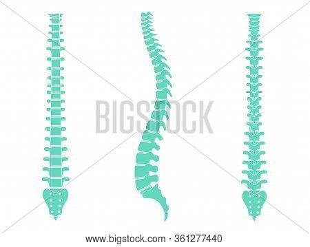 Human Spine Vector Illustration. Backbone And Vertebral Column Anatomy. Scoliosis Concept And Symbol