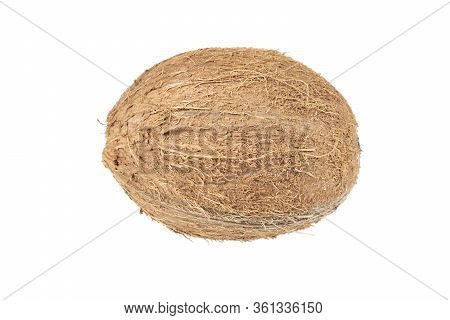 Coconut Isolated On White Background. Whole Raw Coconut Isolated Over White. Fresh Coconut