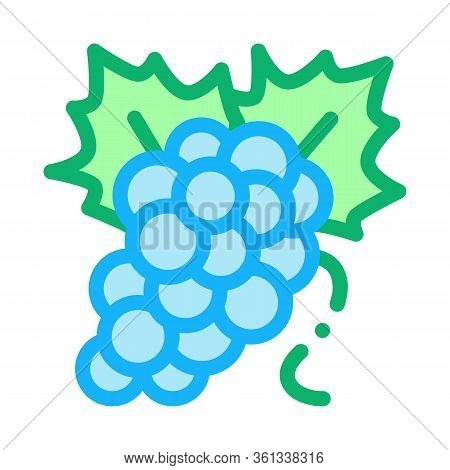 Bunch Of Grapes Icon Vector. Bunch Of Grapes Sign. Color Symbol Illustration