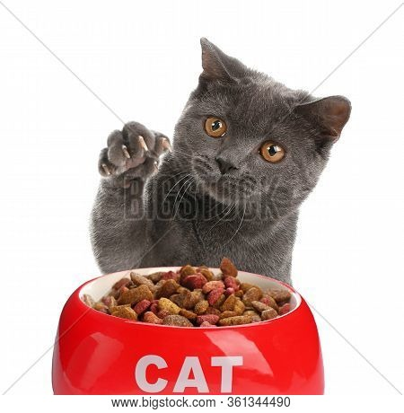 Cute Grey British Shorthair Cat And Feeding Bowl With Dry Food On White Background. Lovely Pet