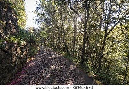 A Path In The Forest Of Queimadas In Central Madeira On The Island Madeira Of Portugal.   Portugal,