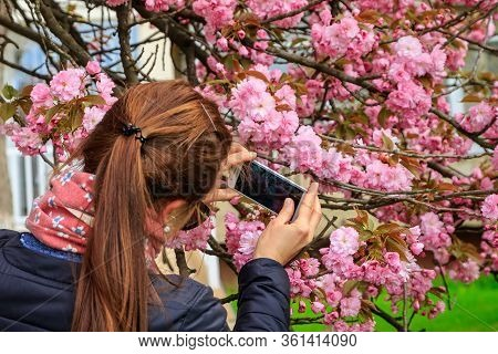 Uzhgorod, Ukraine - April 14, 2020: A Young Girl Photographs A Blossoming Pink Sakura In One Of The