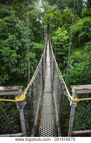 View Of A Hanging Path Between Trees In A Subtropical Jungle Against A Background Of Tall Trees. Wor