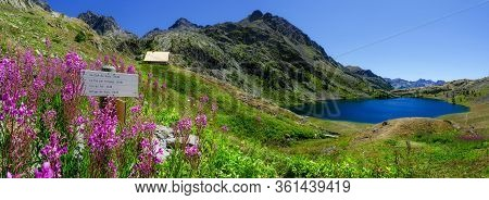 The Lac Superieur De Vens (upper Lake Of Vens In National Park Of Mercantour (france), With Flowers,