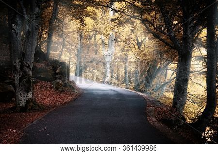 Road Into An Intricate Wood With Autumn Fallen Leaves On The Ground And Fog