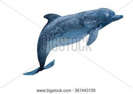 Watercolor Deep Blue Dolphin With Spots Salty Texture. Original Hand Paint Illustration Of Swiming I