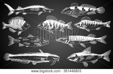 Hand Drawn Vector Fish. Fish And Seafood Products Store Poster. Can Use As Restaurant Fish Menu Or F