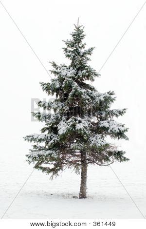 Christmas Tree Whiteout