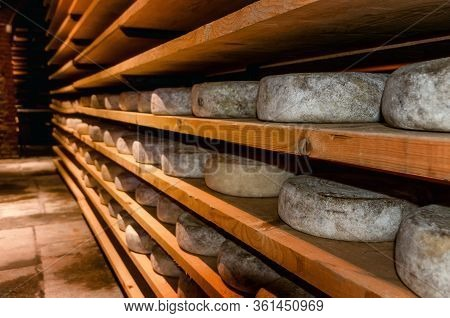 Italian Toma (hard Cheese From Piedmont) Seasoning In A Cold And Dark Cellar