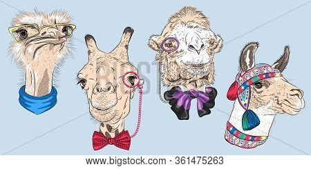 Set Of Hipster Animals. Ostrich Bird In Yellow Eyeglasses And Scarf, Giraffe And Camel In Eyeglasses