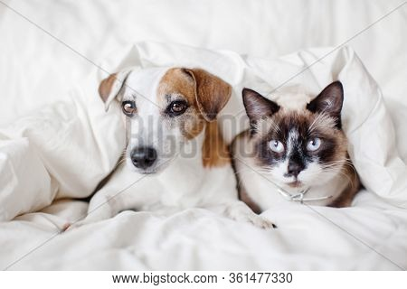 Dog and cat under white blanket. Pets friendship