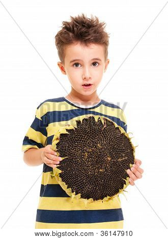Little Boy Holding Ripe Sunflower