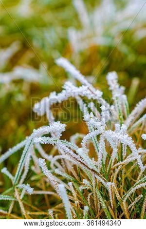 Frozen Grass Between Winter And Spring, First Signs Of Spring