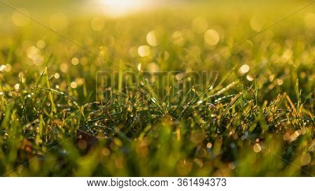 Green Grass Background In The Morning Sunrise