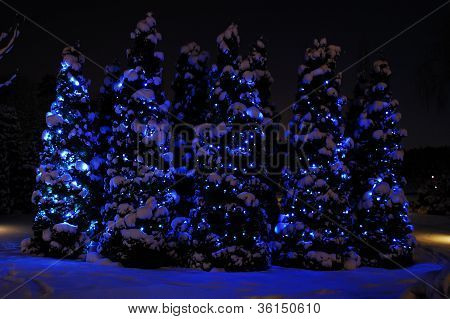 Small fir-trees covered with snow