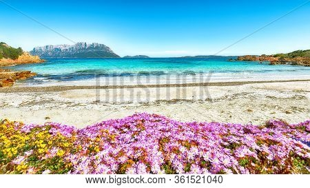 Fantastic Azure Water With Rocks And Lots Of Flowers At Doctors Beach (spiaggia Del Dottore) Near Po