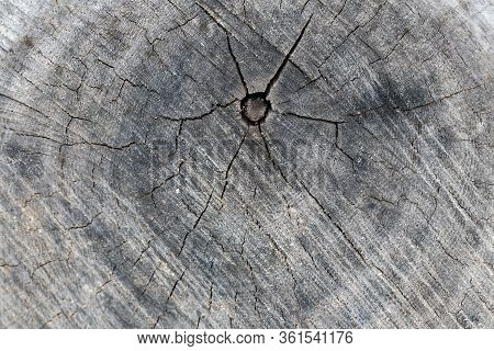 Tree Cut Wood Pattern, Ring Inside Tree Trunk, Cross Section Of Cut Old Tree, Texture And Background