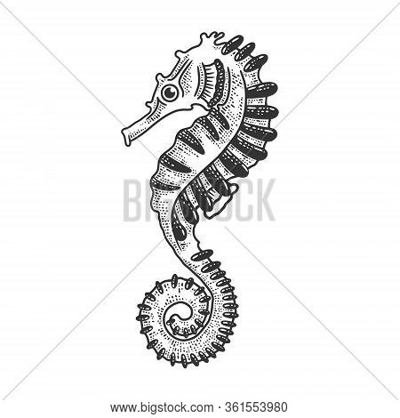 Seahorse Sea Animal Sketch Engraving Vector Illustration. T-shirt Apparel Print Design. Scratch Boar