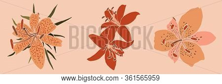 Collection Art Collage Lily Flower In A Minimal Trendy Style. Silhouette Of Lily Plants On A Pink Ba