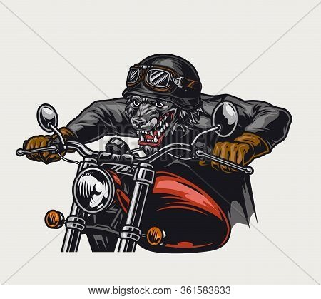 Aggressive Animal Biker Vintage Colorful Concept With Wolf Head Rider In Helmet And Goggles Driving