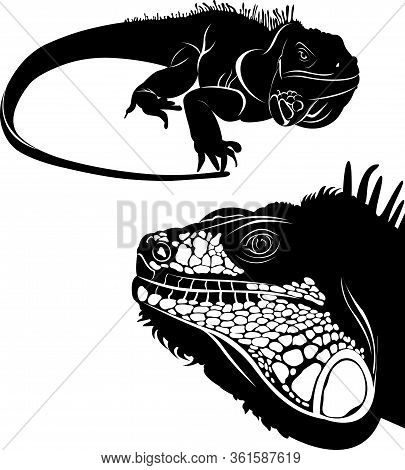 Lizard Iguana Set Of Silhouettes Vector. Collection Of Animal Icons.