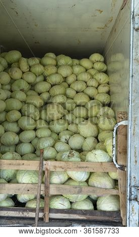 Group Of Green Cabbage In The Supermarket, Cabbage Background, Fresh Cabbage From The Farm Field, A
