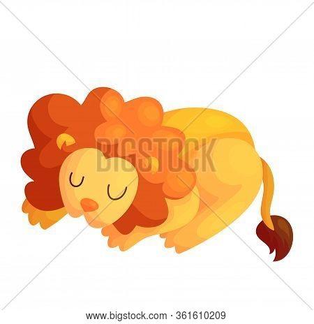 Cute Sleeping Vector Lion. Jungle Baby Animal Isolated Illustration. Friendly African Mammal. Nurser