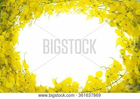 Golden Shower (cassia Fistula) On White Background, National Tree Of Thailand