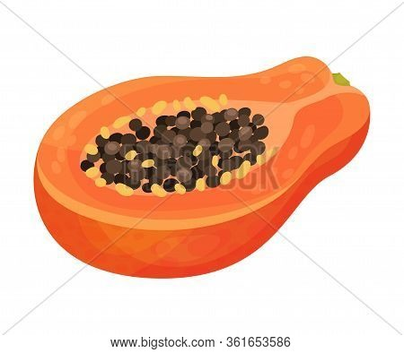 Halved Papaya Fruit Showing Orange Flesh And Numerous Black Seeds Vector Illustration