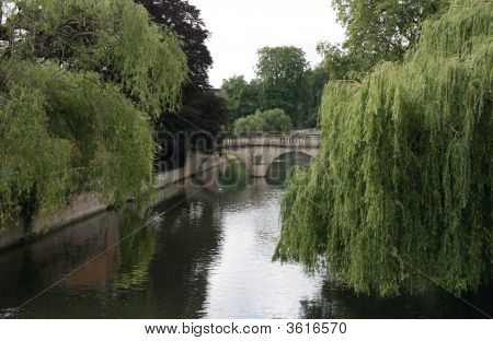 Willows Over River Cam.