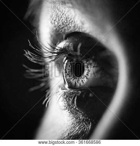 Black And White Woman Eye Close Up - Macro Detail