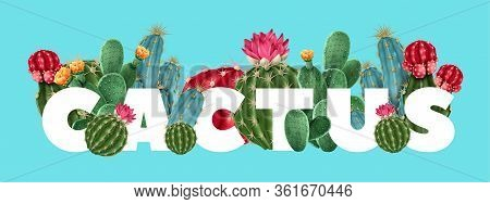Cactus Floral Tropical Vector Illustration With Different Varieties Of Succulents And Cacti Includin