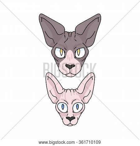 Cute Cartoon Sphynx Cat And Kitten Face Vector Clipart. Pedigree Exotic Kitty Breed For Cat Lovers.