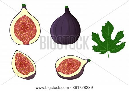 Set Of Whole Fig Fruit, Half Of It, Wedges, Leaves, Isolated On White Background. Vector Flat Illust