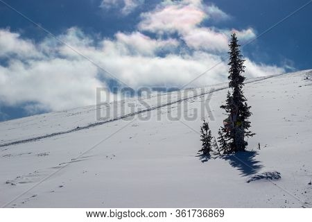 Winter Landscape With A Lonely Spruce On A Snowy Mountainside On A Bright Sunny Day In The Ergaki Mo