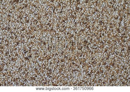 Food Background Sesame Seeds Of Varying Degrees Of Roasting, Multi-colored Sesame Seeds, Selective F