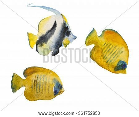 The Heniochus Black And White Butterflyfish, Also Known As Longfin Bannerfish, And Two Masked Butter
