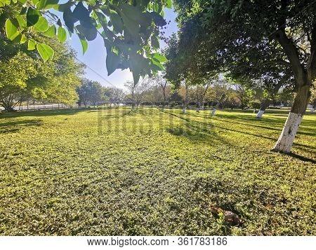 Paisaje Soleado Día Bonito Verde Natural Amplio