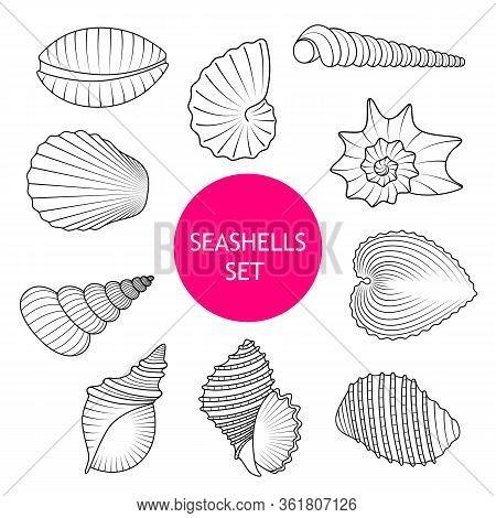 Vector Set Hand Drawn Seashell. Seashell Icon Isolated On White Background.