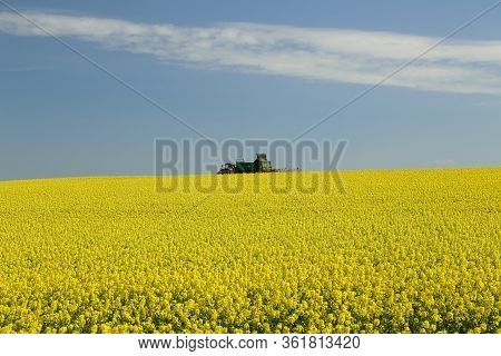 Raps Field - Cultivated Colorful Raps Field In Germany