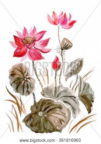Red Lotus With Leaves, Buds And Seeds, Watercolor Illustration On A White Background, Isolated, Trad
