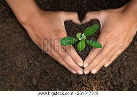 Conserve The Environment By Planting Trees. Hand Protect  With Plant Growing. Concept Finance Enviro