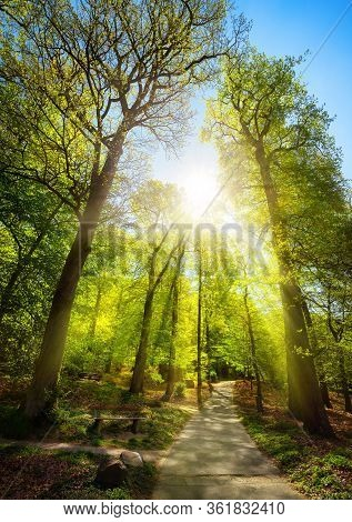 Bright Sunrays Beautifully Falling Through The Trees Of A Park, With A Path Leading Uphill Towards T