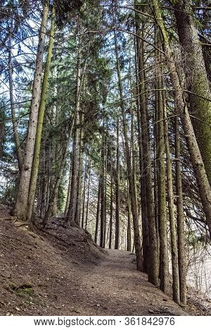 Hiking Path In Coniferous Forest, Stiavnica Mountains, Slovak Republic. Seasonal Natural Scene. Trav