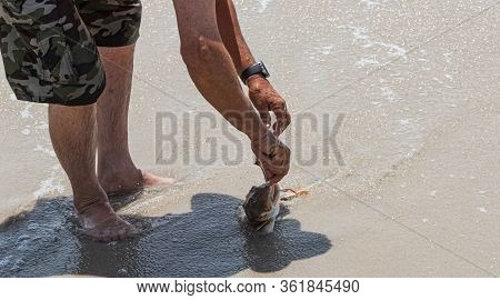A Fisherman Is Removing A Hook From A Sea Robin Fish Mouth On The Beach.