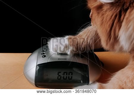Red Cat Turns Off The Alarm Clock On The Clock With His Paw At 6 Am. Time To Wake Up And Go To Work.
