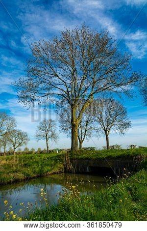 Spring Nature Landscape In Sunny Day In Betuwe, Gelderland, Netherlands